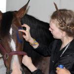 indenai - piesimas ant zirgu - 2